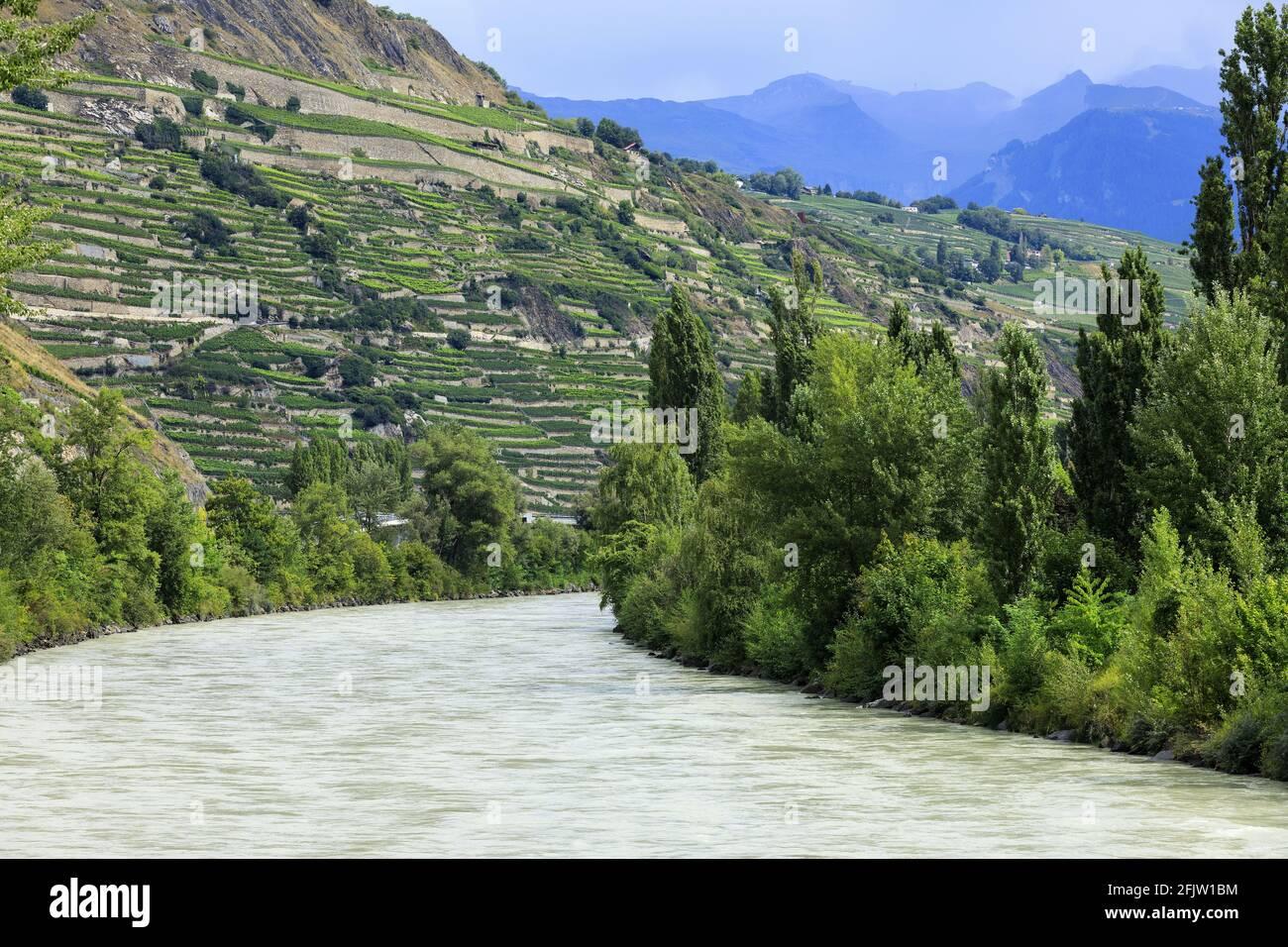 Schweiz, Kanton Wallis, Sion, Fluss Le Rhone, Walliser Weinberge Stockfoto