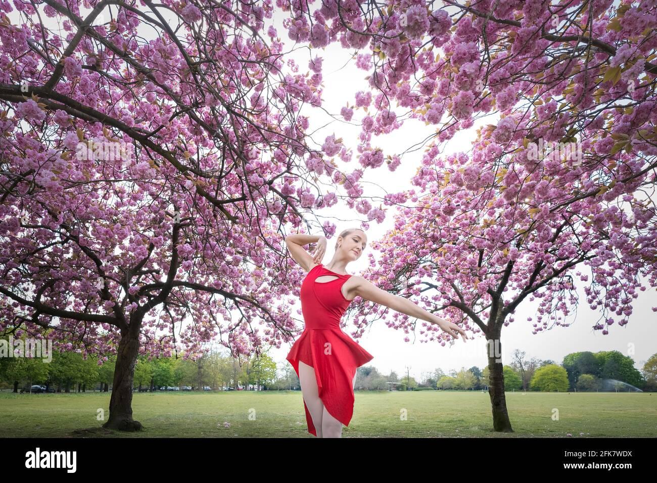 London, Großbritannien. April 2021. Internationaler Tanztag: ARIA Tilah, Studentin der Royal Academy of Dance, tritt am Internationalen Tanztag unter den auffallenden Kirschblütenbäumen im Greenwich Park auf. Der Internationale Tanztag, der erstmals 1982 gefeiert wurde, findet seit dem Jahrestag der Geburt von Jean-Georges Noverre (1727-1810), der als Schöpfer des modernen Balletts gilt, jedes Jahr statt. Kredit: Guy Corbishley/Alamy Live Nachrichten Stockfoto