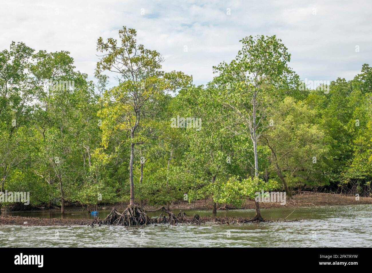 Kreuzfahrt entlang des Sibu Laut-Telaga Air Flussufers, Matang, Sarawak, Malaysia Stockfoto