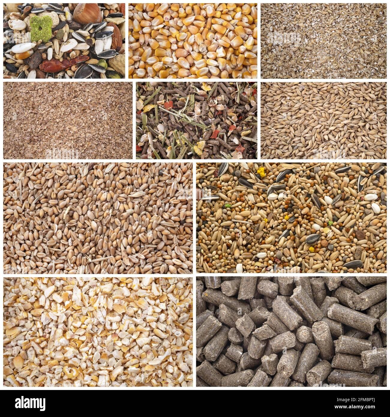 Zusammengesetztes Bild von Getreide für Tiernahrung Stockfoto