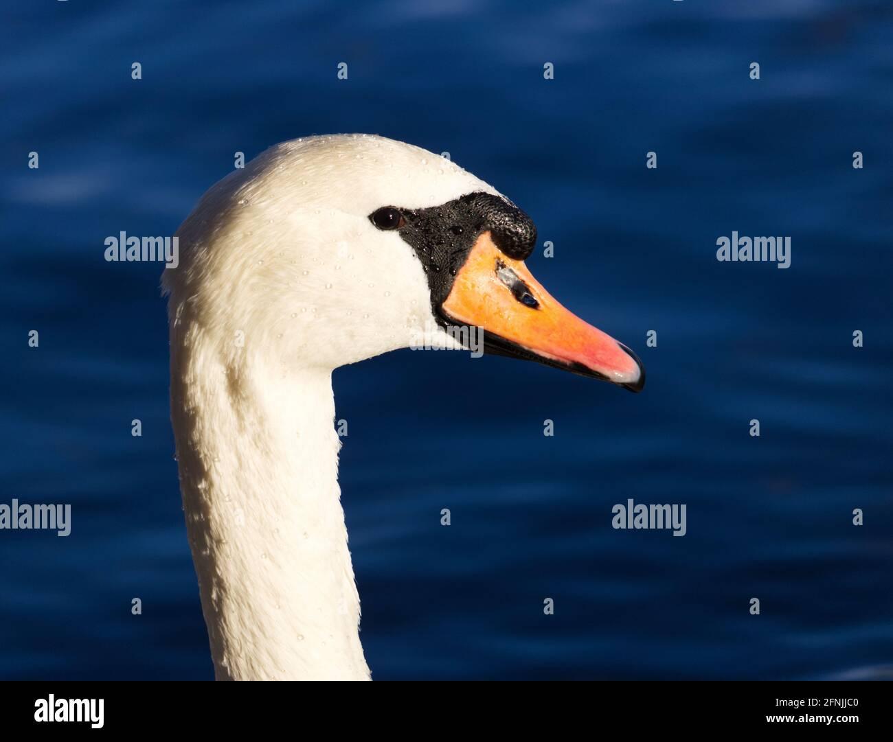 Für profilbild bilder Tipps und