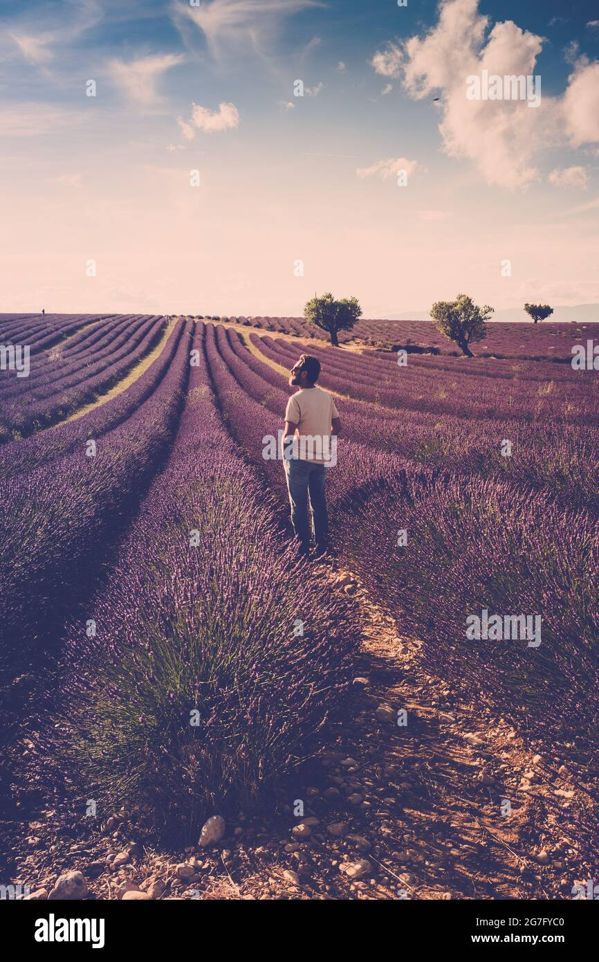 Ein stehender Mann schaut auf das Lavendelfeld um ihn herum - menschliche und schöne Reise malerische Natur im Freien - frankreich provence valensole Lage - Duft Stockfoto