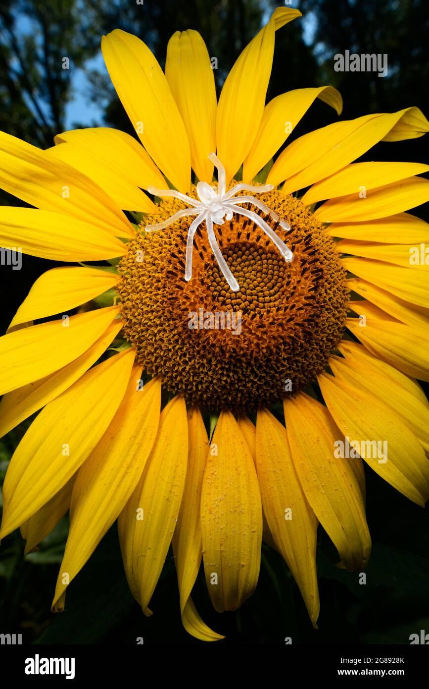 Künstliche Natur Stockfoto