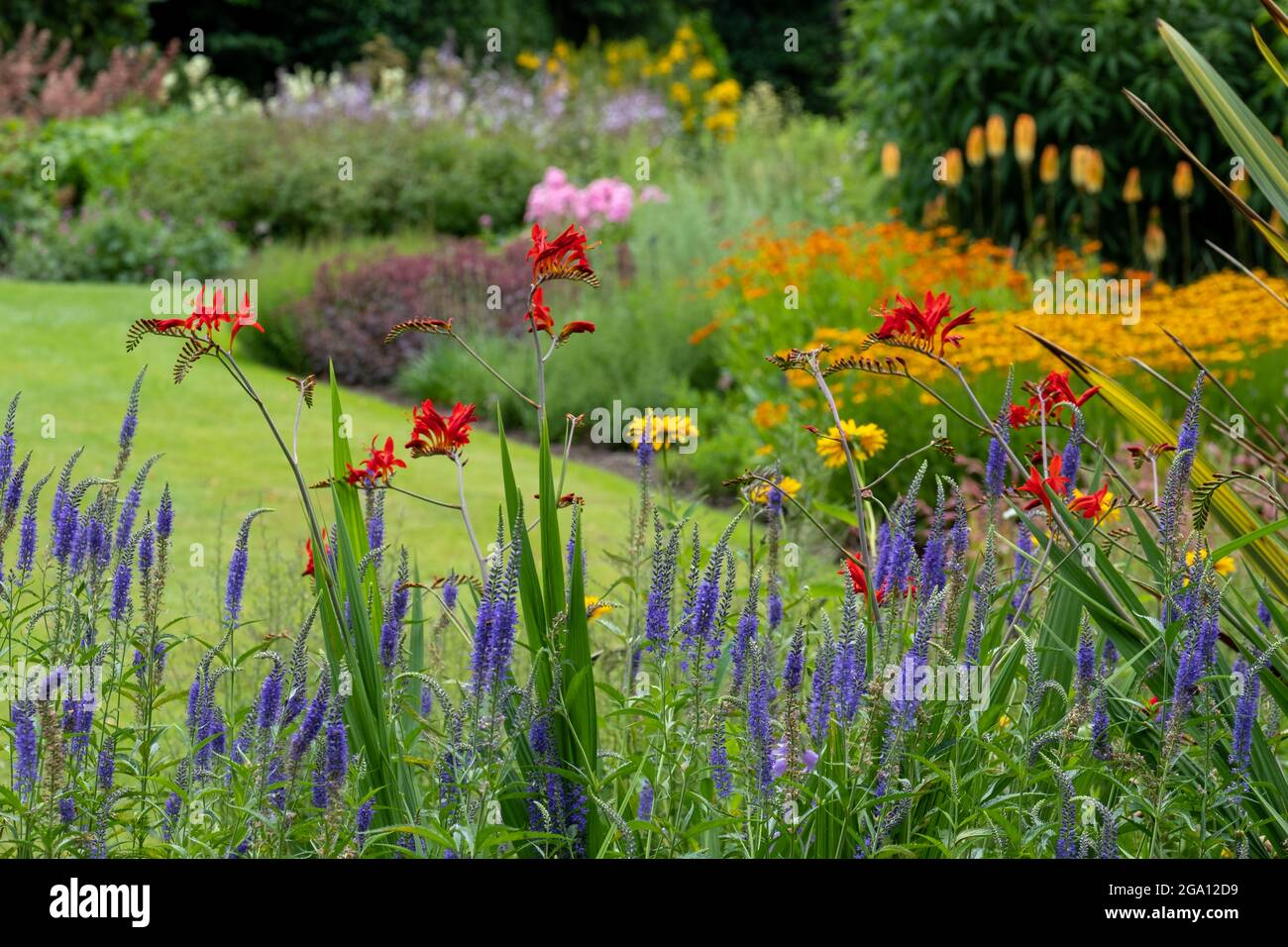 Bressingham Gardens in der Nähe von Diss in Norfolk. Farbenfroher Garten in naturalistischem Pflanzstil mit breiter Farbpalette gepflanzt. Stockfoto