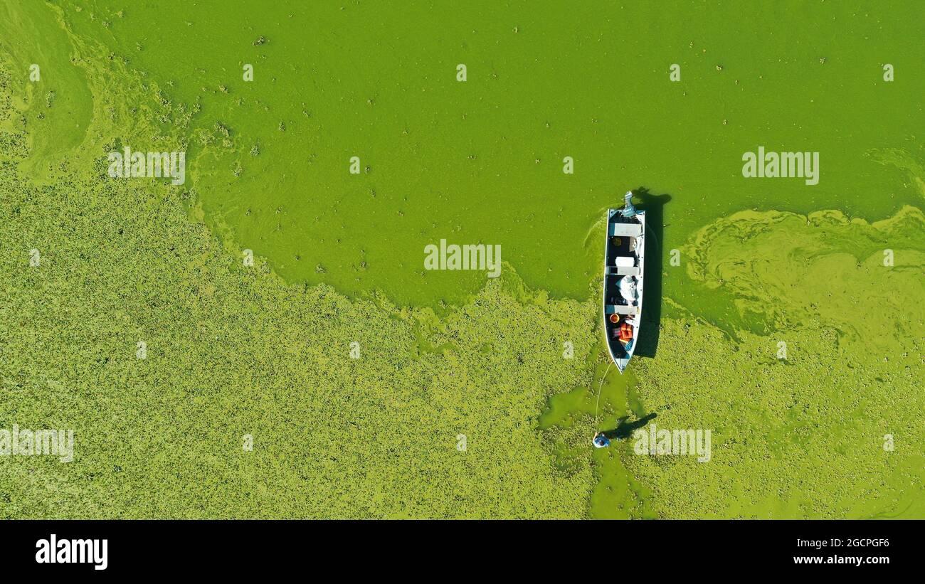 Cardoso, Brasilien. August 2021. Der Stausee Água Vermelha in Cardoso erreichte 12 % seiner Kapazität. Mit dem niedrigen Wasser verließen Wasserpflanzen den Damm mit einer grünlichen Färbung. Ab diesem Montag (09) wird der IPCC eine Reihe neuer Berichte veröffentlichen, die bis zum 2022. Februar folgen sollen. Auf dem Foto versucht ein Fischer, inmitten der Wasserpflanzen an Bord eines Bootes zu gehen. Kredit: Joel Silva/FotoArena/Alamy Live Nachrichten Stockfoto