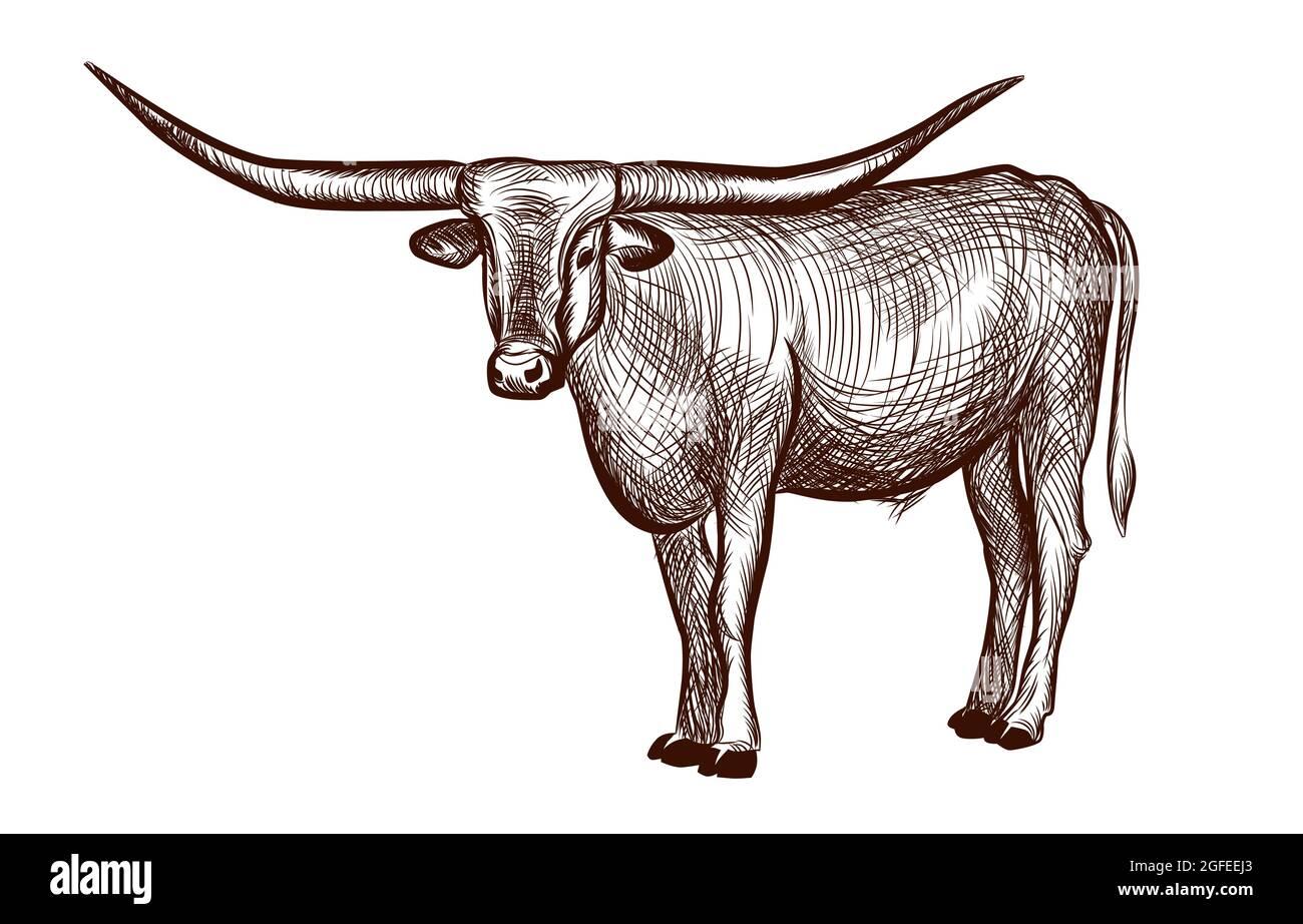 Texas Longhorn Stier, Haustiere Tinte Skizze Hand gezeichnet
