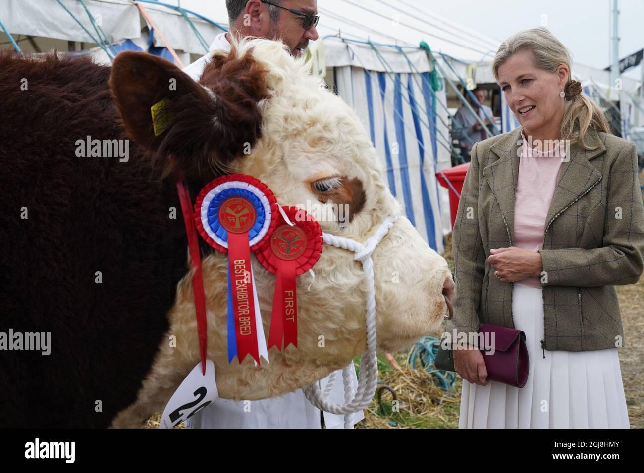 Die Gräfin von Wessex blickt auf den Champion Hereford-Bullen auf der Westmorland County Show in Crooklands, Cumbria, bevor die Prinzessin Royal und die Gräfin von Wessex einen Besuch abstatten. Bilddatum: Donnerstag, 9. September 2021. Stockfoto