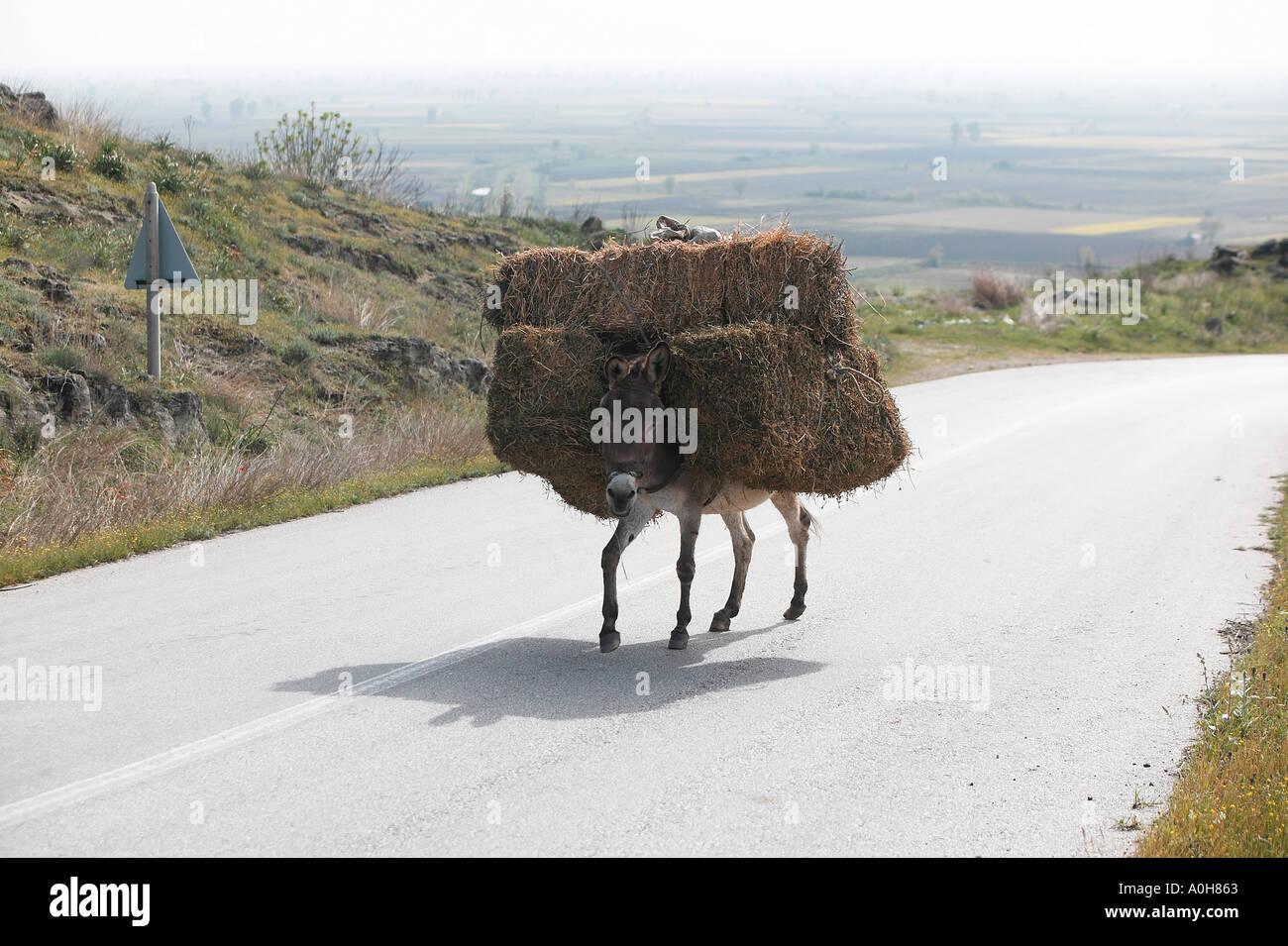 Geduldiger Esel Stockfotos und  bilder Kaufen   Alamy