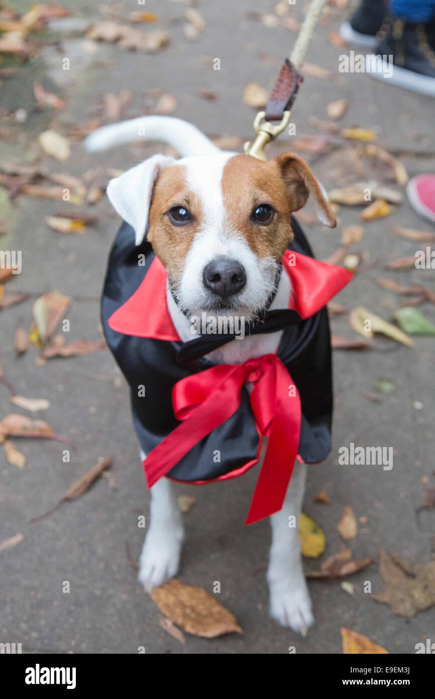 Hunde Im Kostum Am Halloween Dog Walk Organisiert Durch Die Liebe