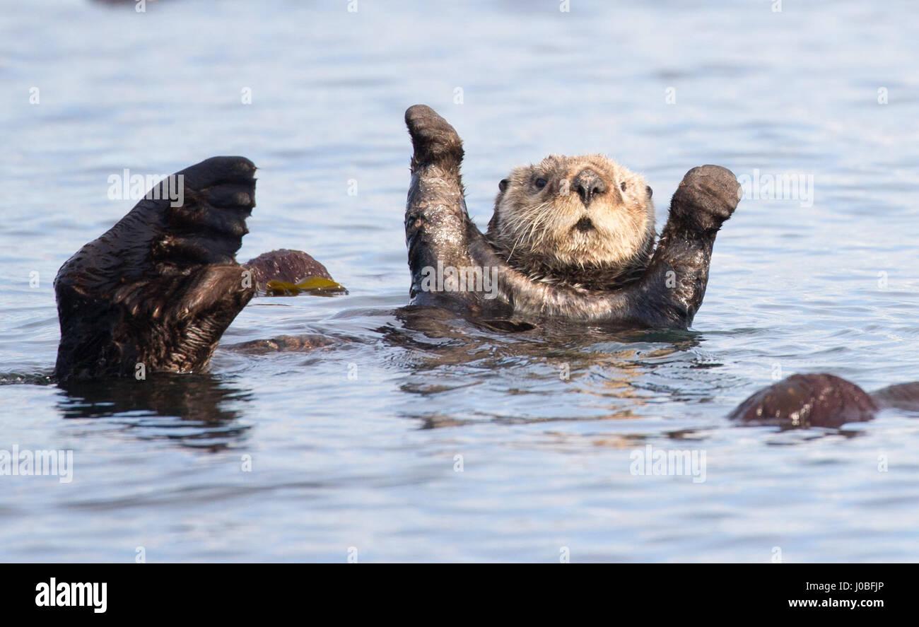 Hände Hoch Diese Otter übergibt Ordnungsgemäß Du Hast Von Der