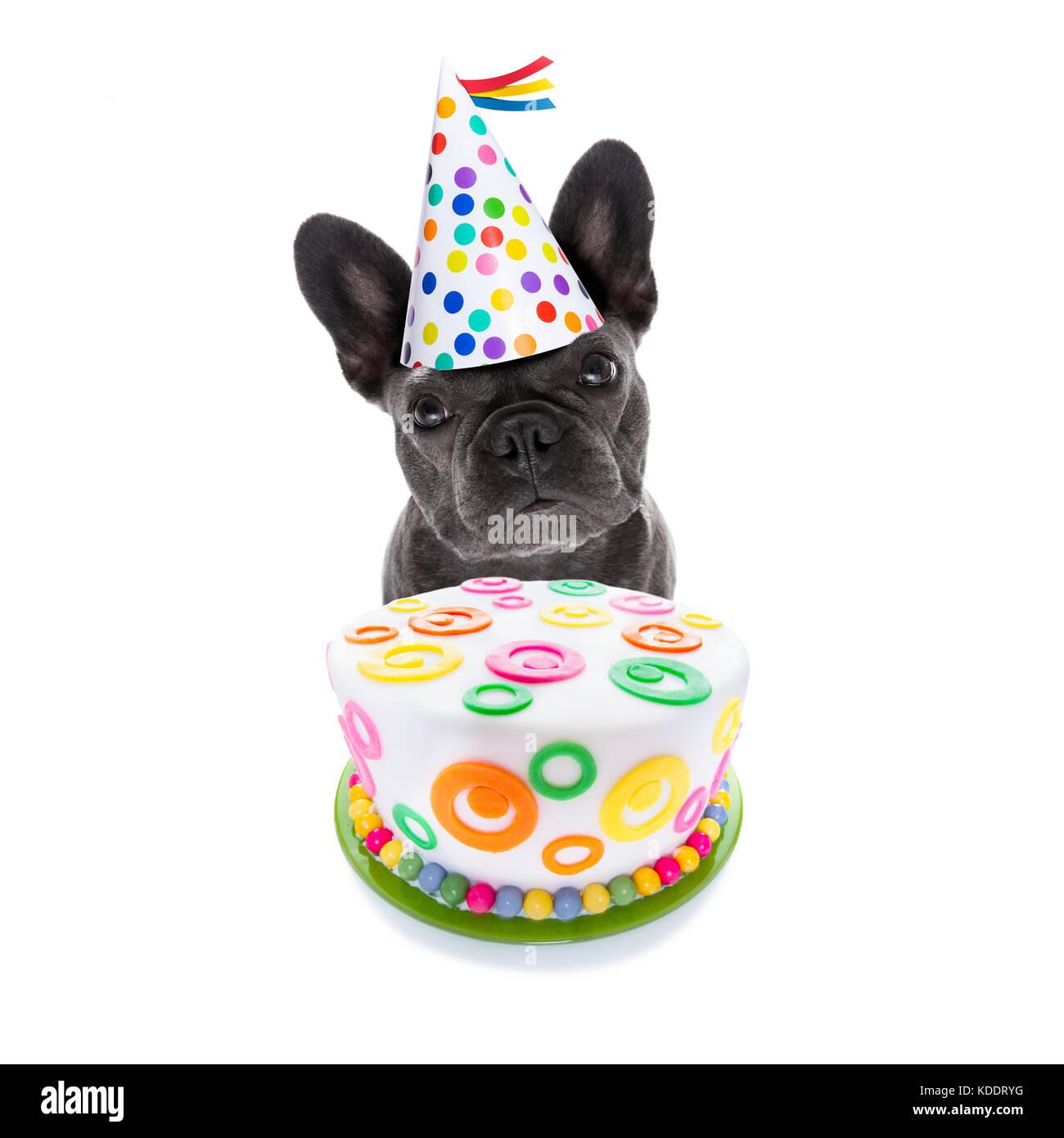 Franzosische Bulldogge Hund Hungrig Fur Einen Herzlichen Gluckwunsch