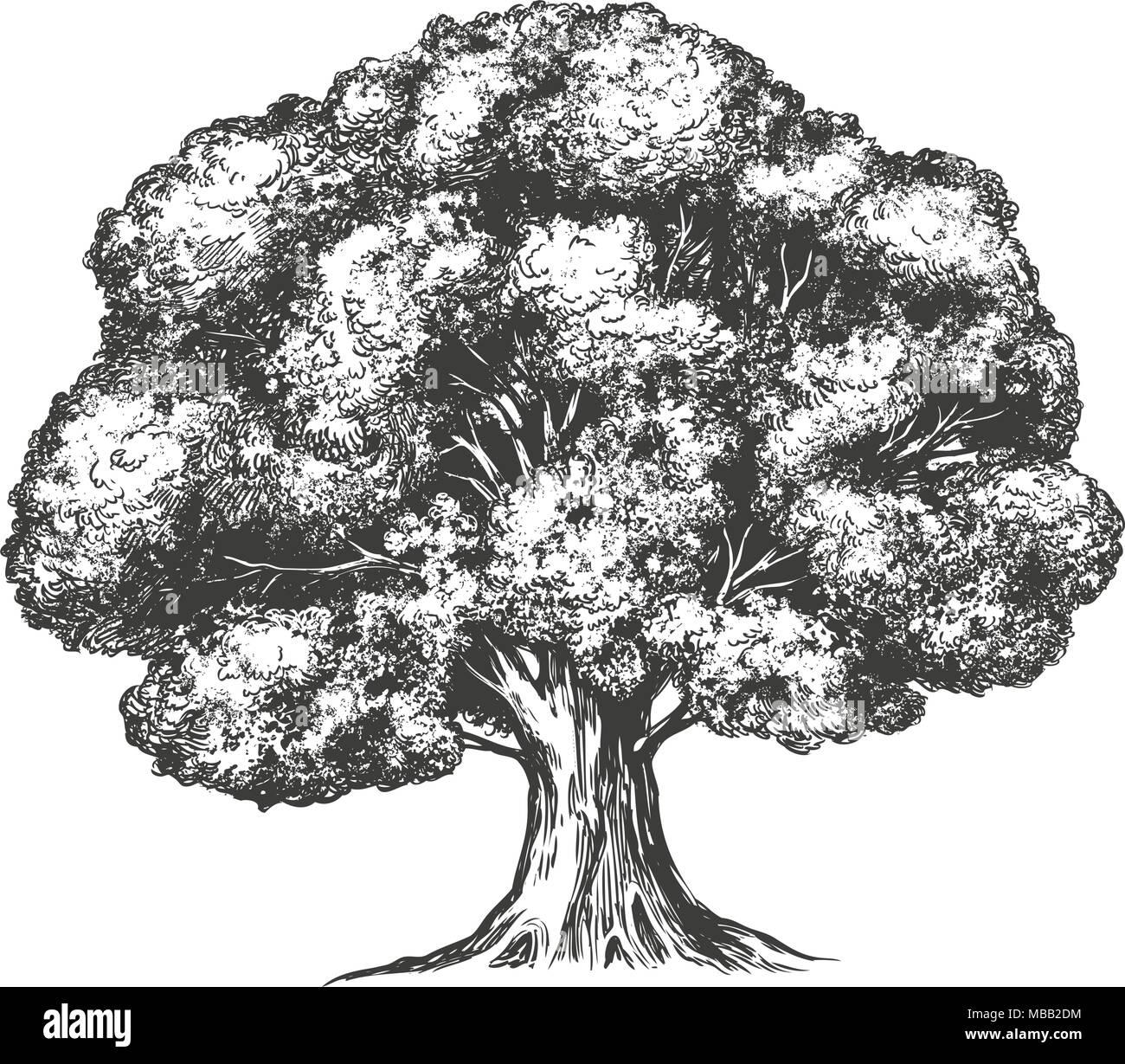baum hand gezeichnet vektor-illustration realistische skizze vektor