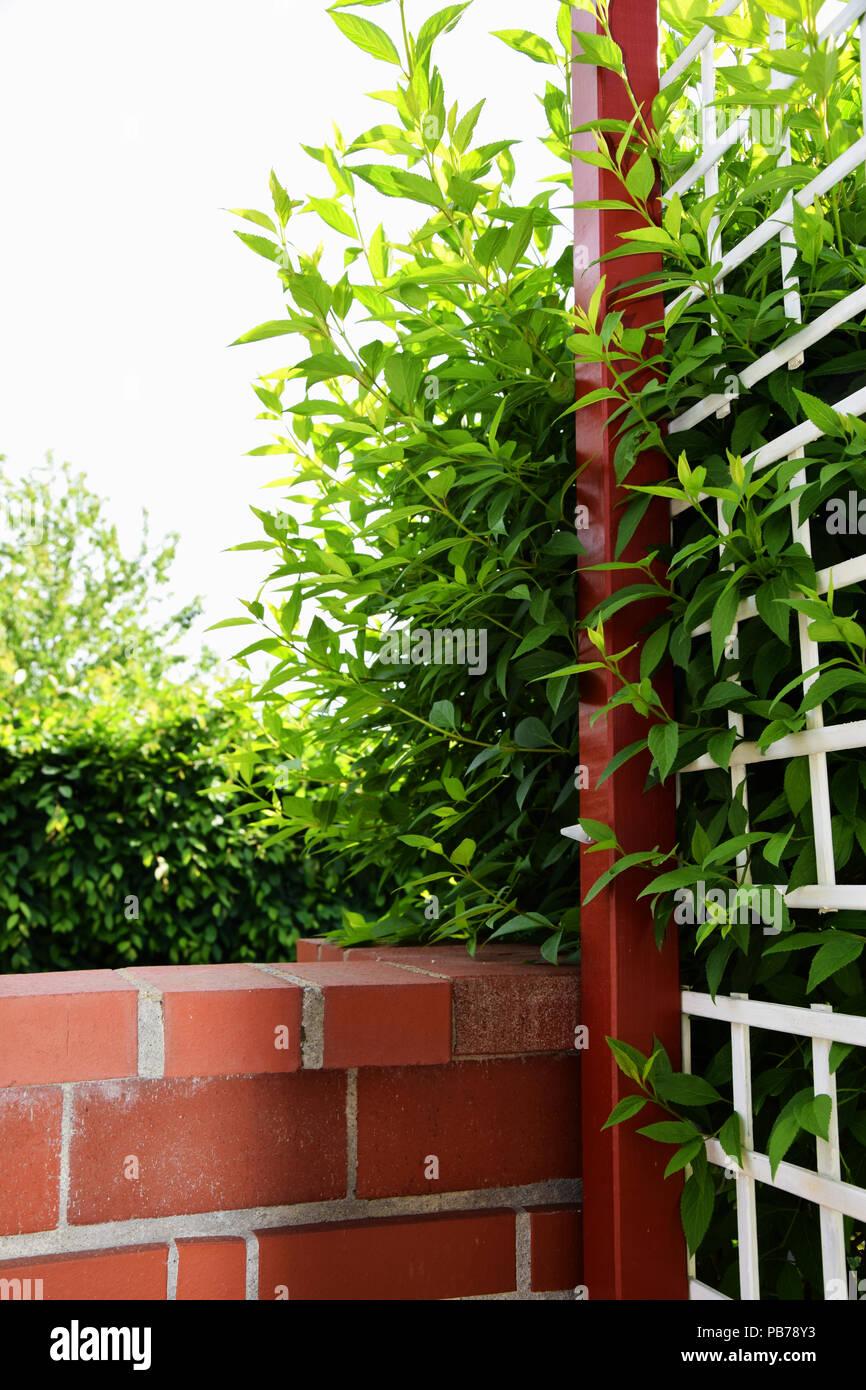 Bauen Mauer Aus Backstein Und Holz Zaun Mit Blatter Eines Bush Durch