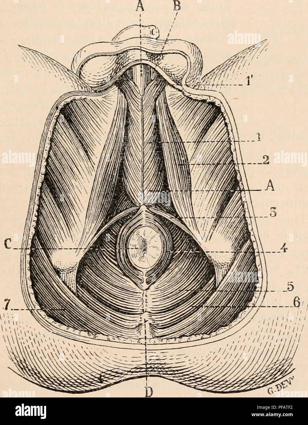Wörterbuch De Physiologie Physiologie Ich 55 2 Abb 229 â