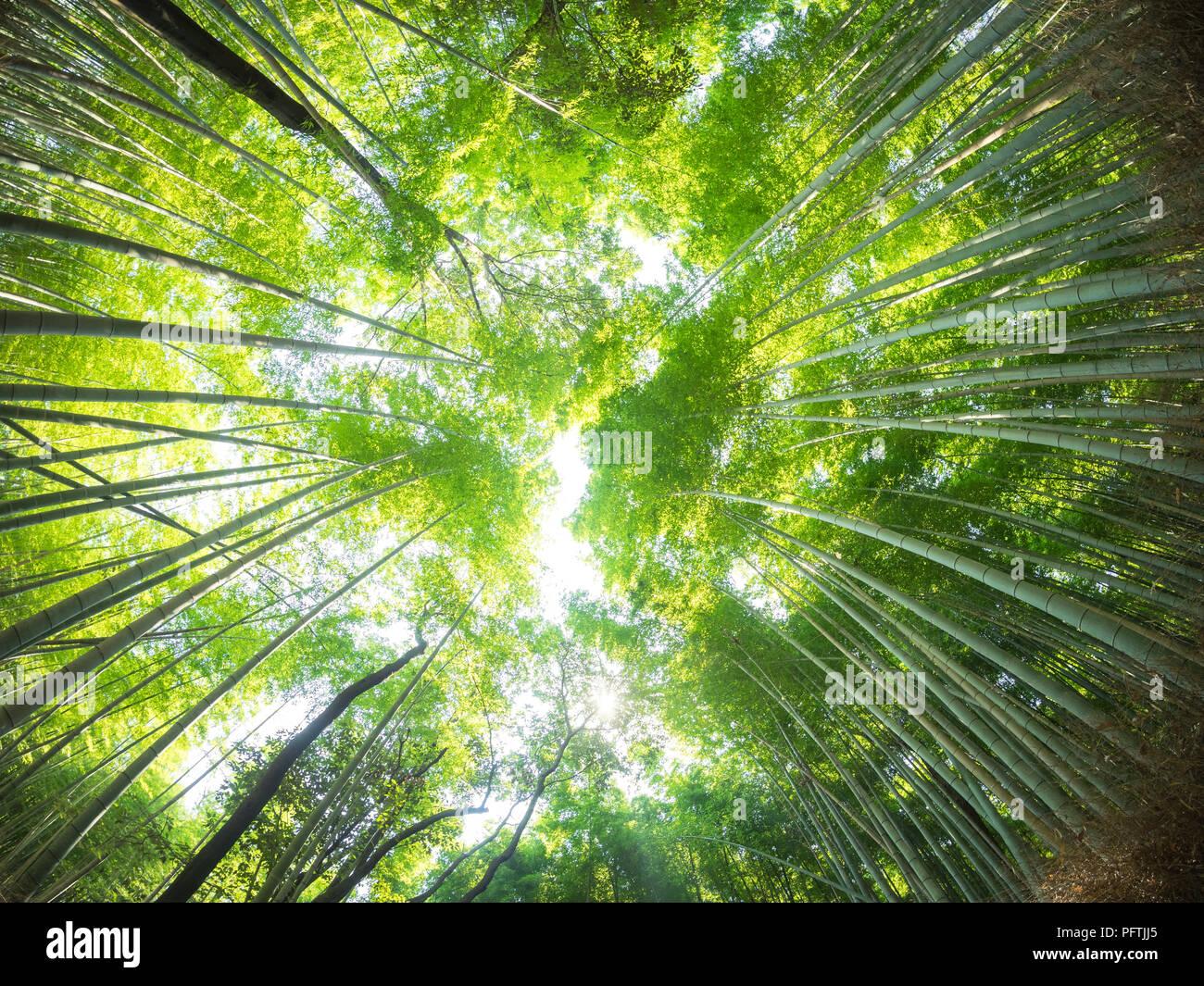 Ein Fischauge Weitwinkelansicht Sagano Bambuswald Arashiyama
