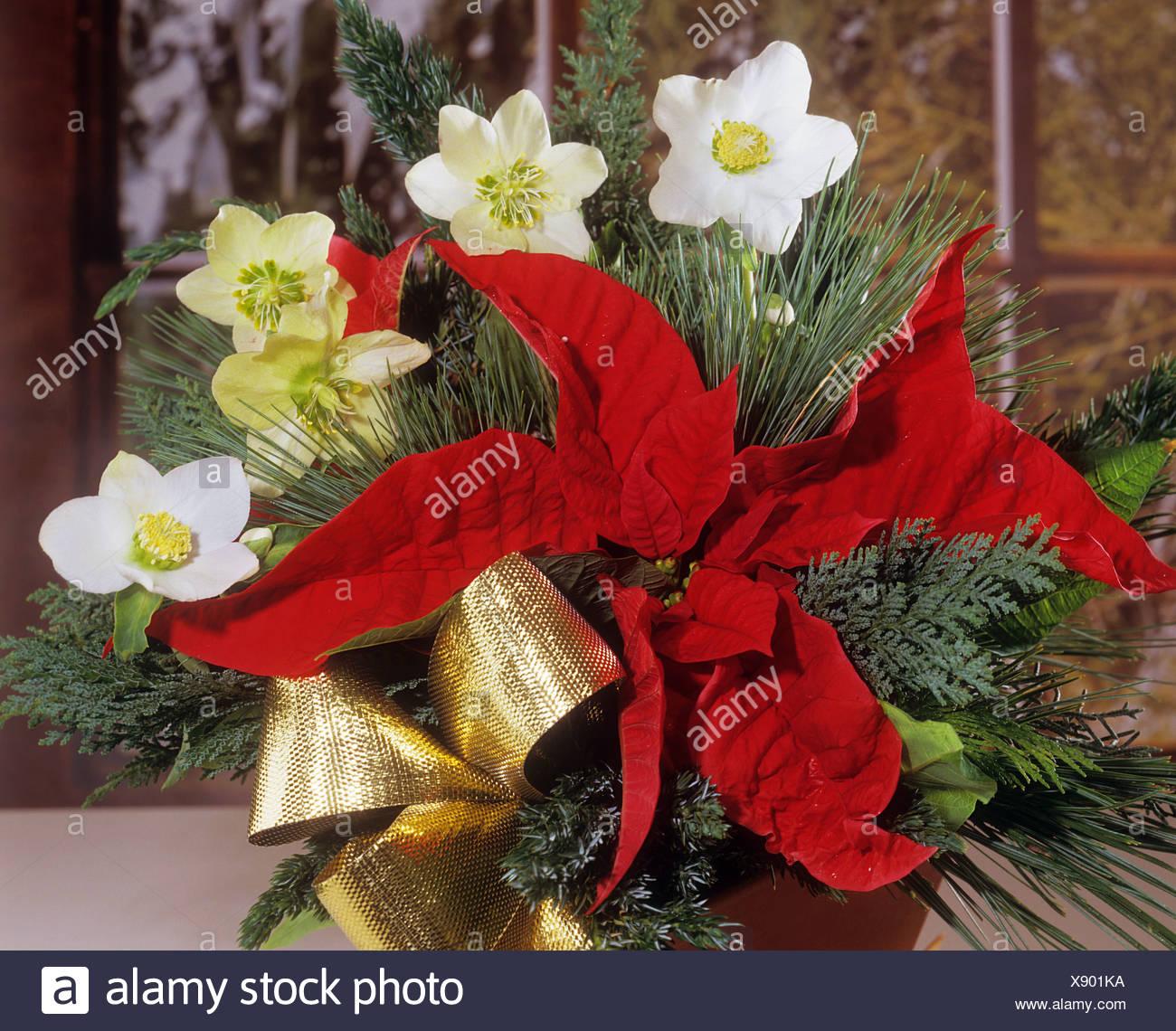 Bukett: Weihnachten Rosen mit Weihnachtsstern Stockfoto, Bild ...