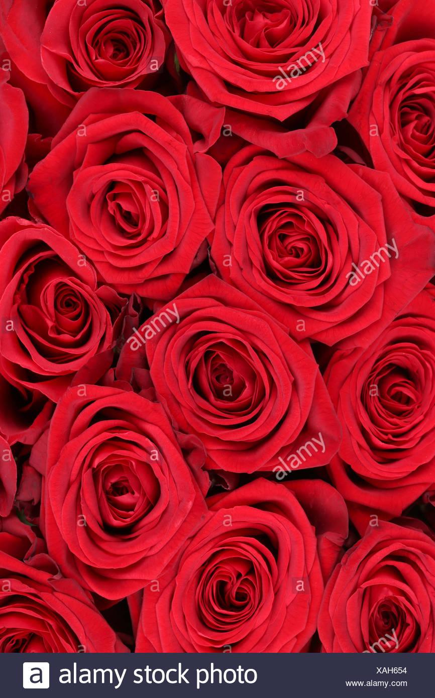 Hintergrund Rote Rosen Blumen Zum Geburtstag Valentinstag Oder