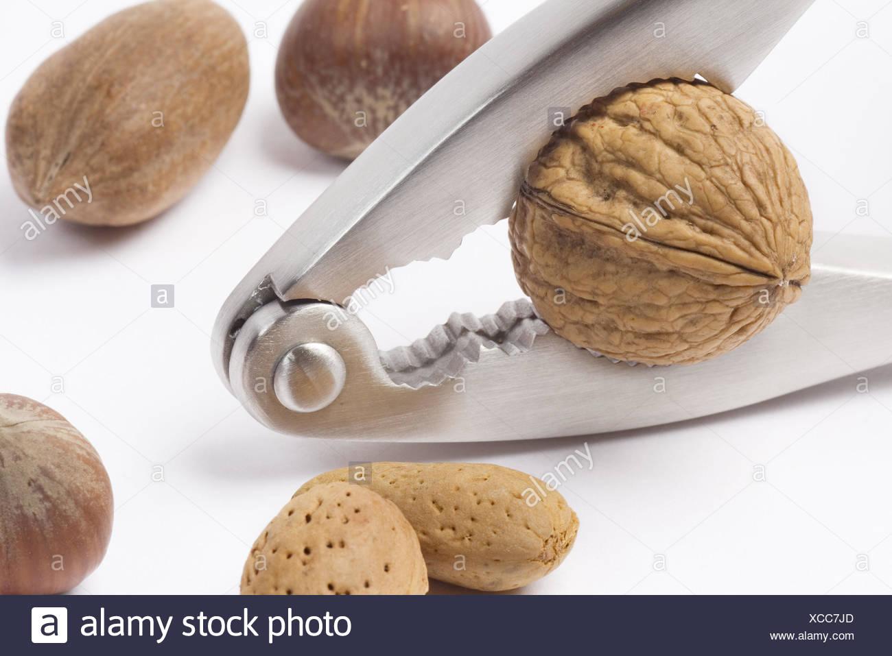 Nussknacker Muttern Verstorben Crack Nuss Arten Edelstahl
