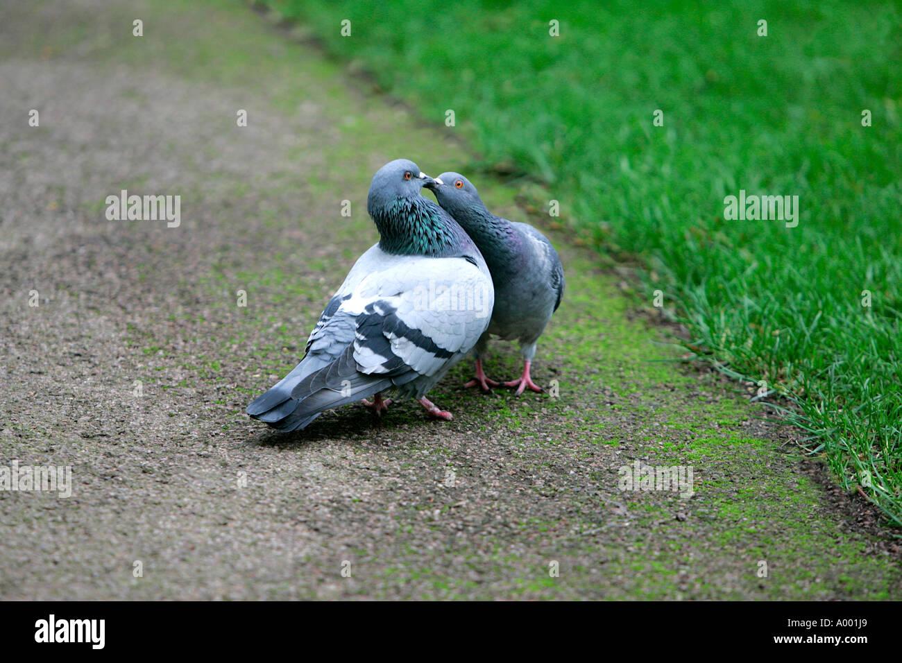 vögeln im freien