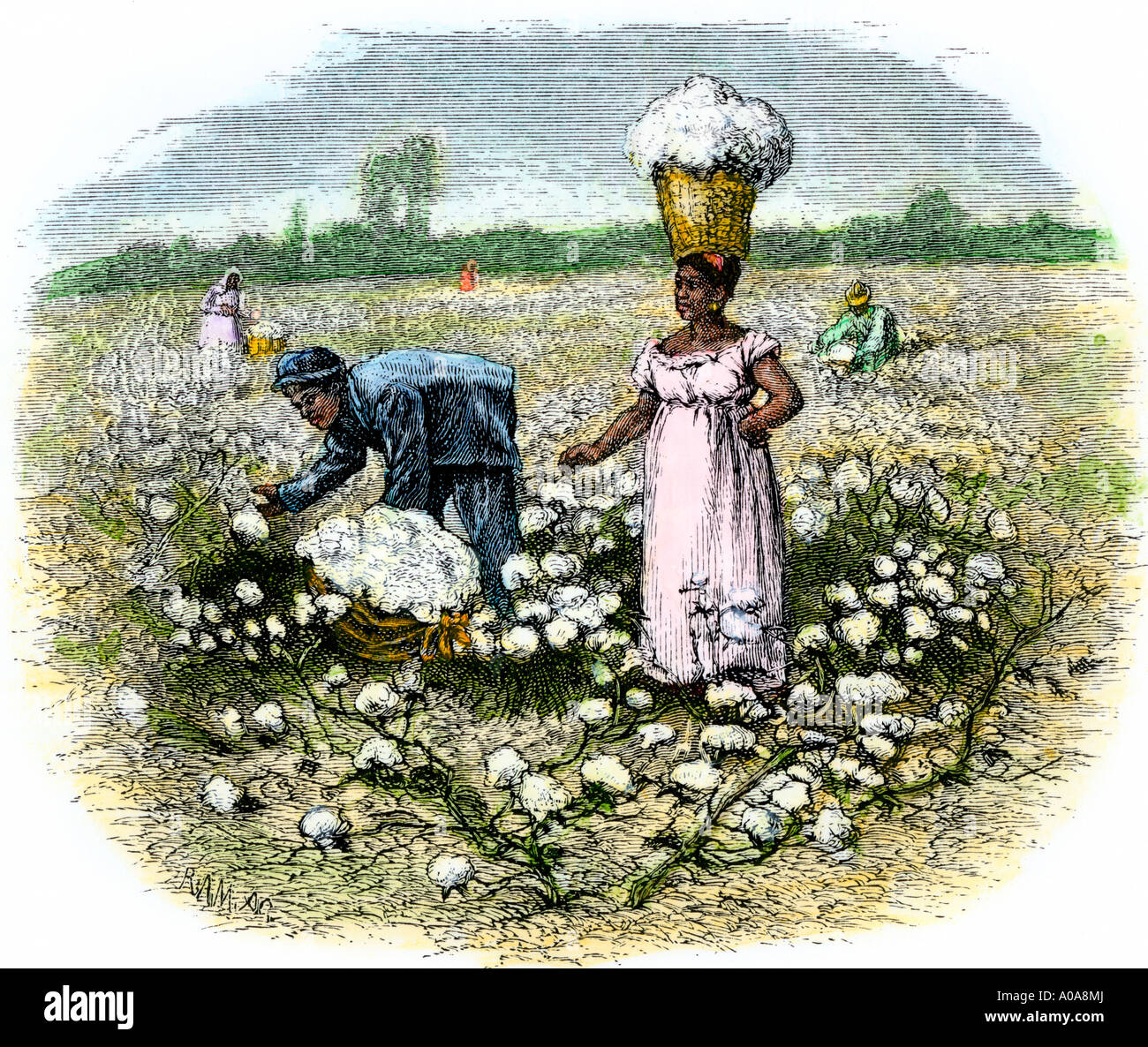 African American slaves Baumwolle pflücken auf einer Plantage im tiefen Süden 1800. Hand - farbige Holzschnitt Stockfoto