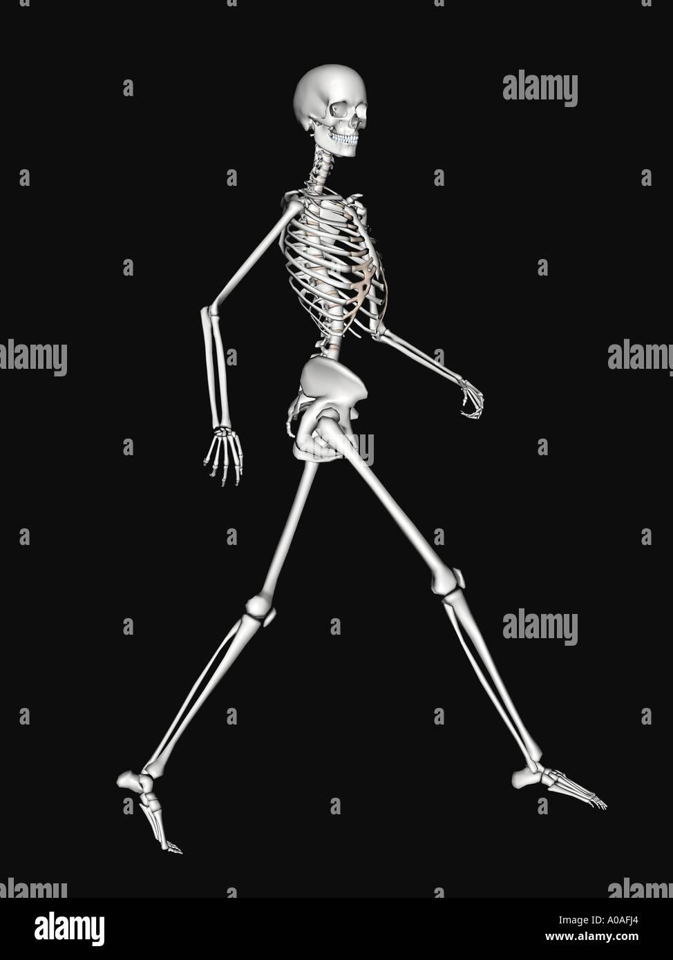 Tolle Menschliches Skelett Diagramm Mit Etiketten Ideen ...