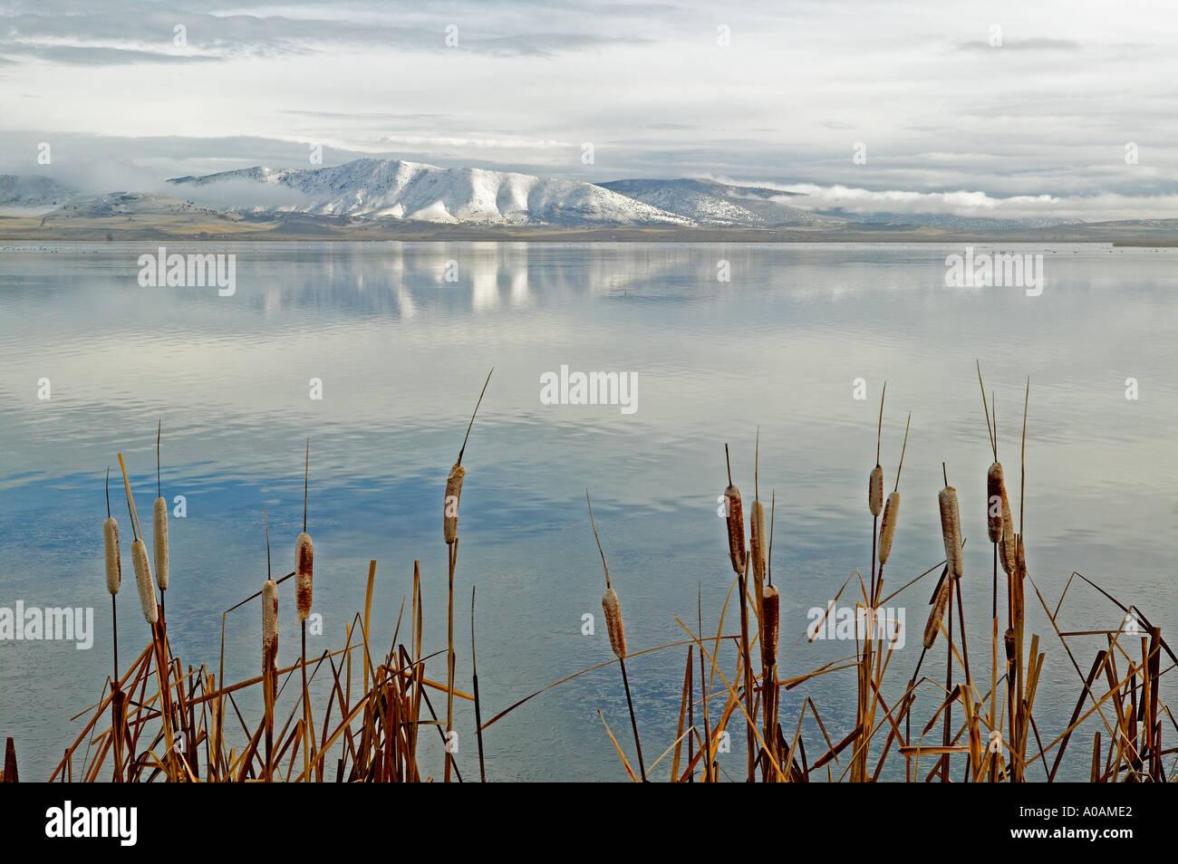 Rohrkolben und Reflexion in Lower Klamath Lake National Wildlife Refuge-Kalifornien Stockbild