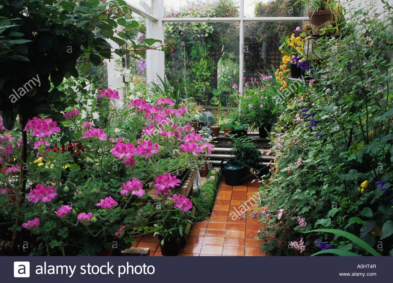 Cool Wintergarten Einrichtung Das Beste Von Wintergarten-einrichtung Mit Pelargonien.