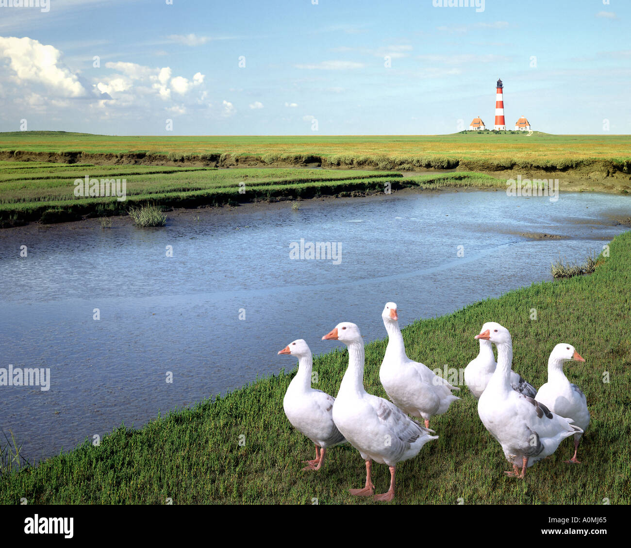 DE - Schleswig-Holstein: Westerhever Leuchtturm Stockbild
