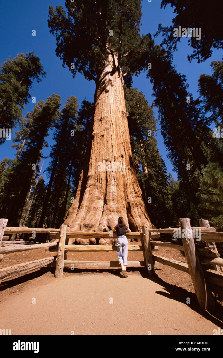 General Sherman Tree, Sequoia Nationalpark Kalifornien Vereinigte ...