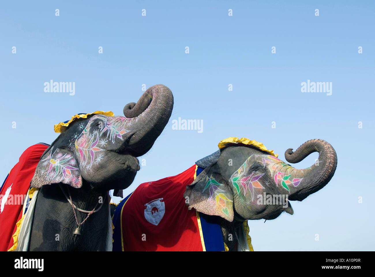 Niedrigen Winkel Ansicht von bemalten Elefanten bläst ihre Trompeten, Jaipur, Rajasthan, Indien Stockbild