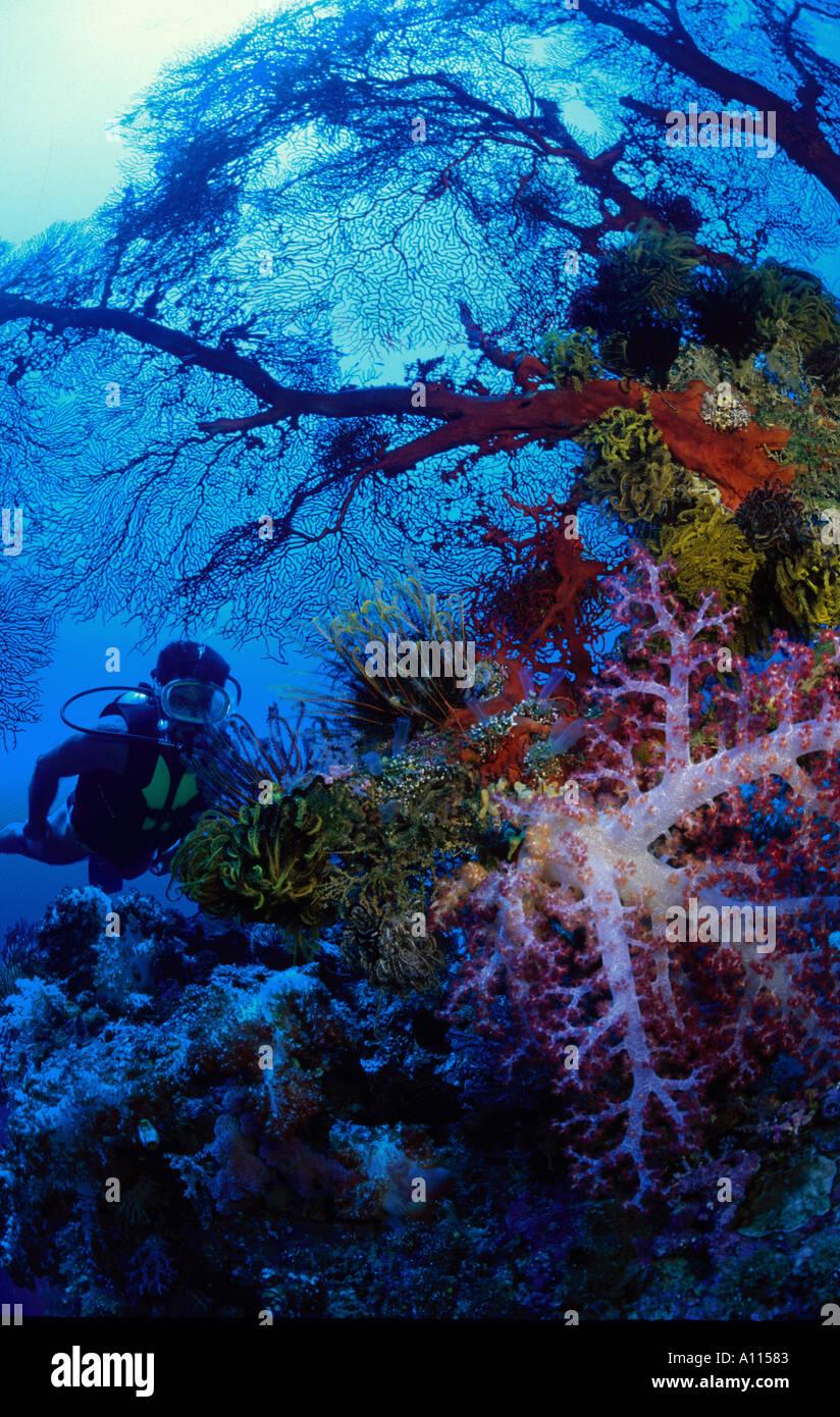 Life Aquatic Film Stockfotos & Life Aquatic Film Bilder - Seite 8 ...