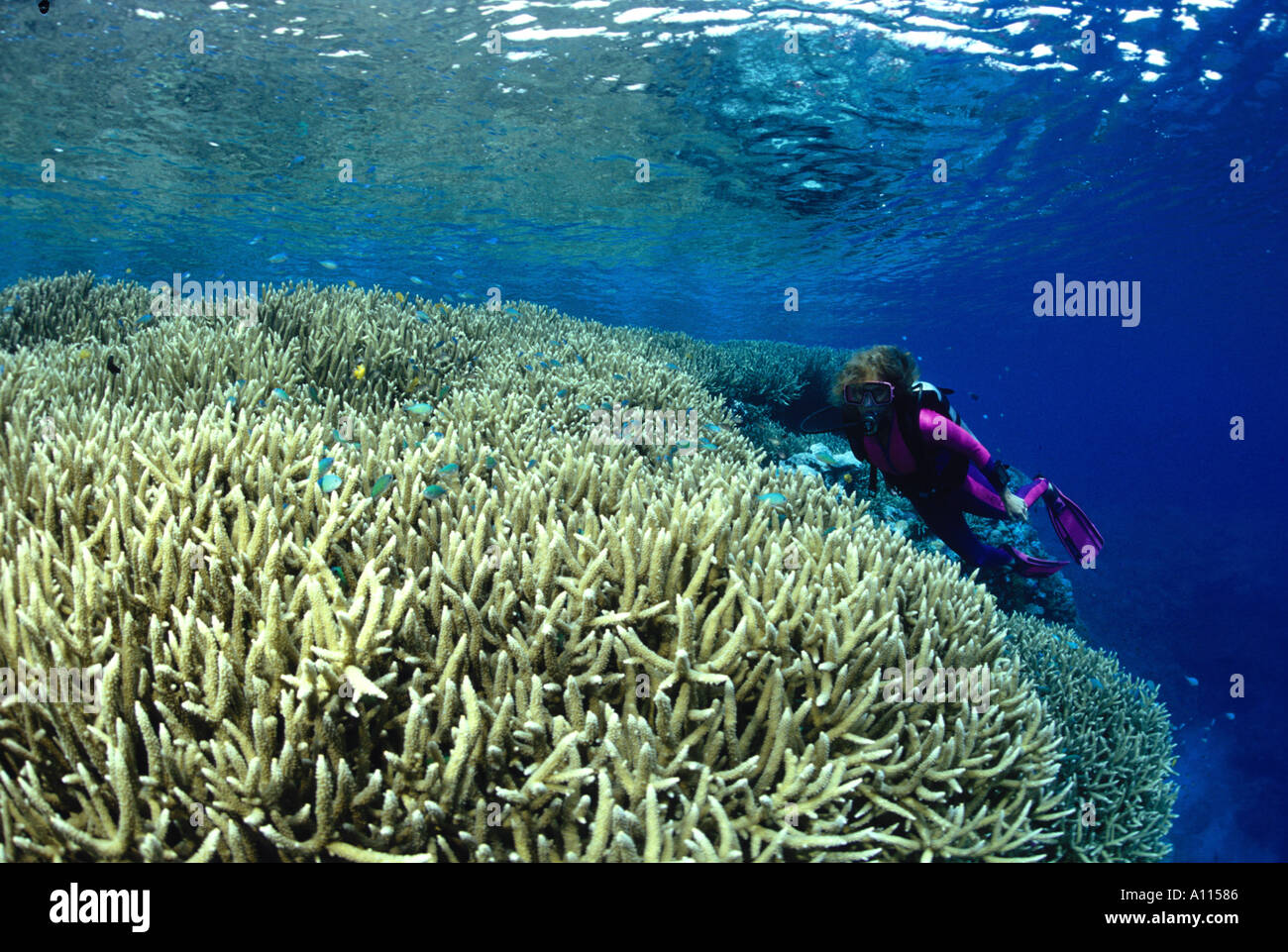 Scuba Divers On One New Stockfotos & Scuba Divers On One New Bilder ...