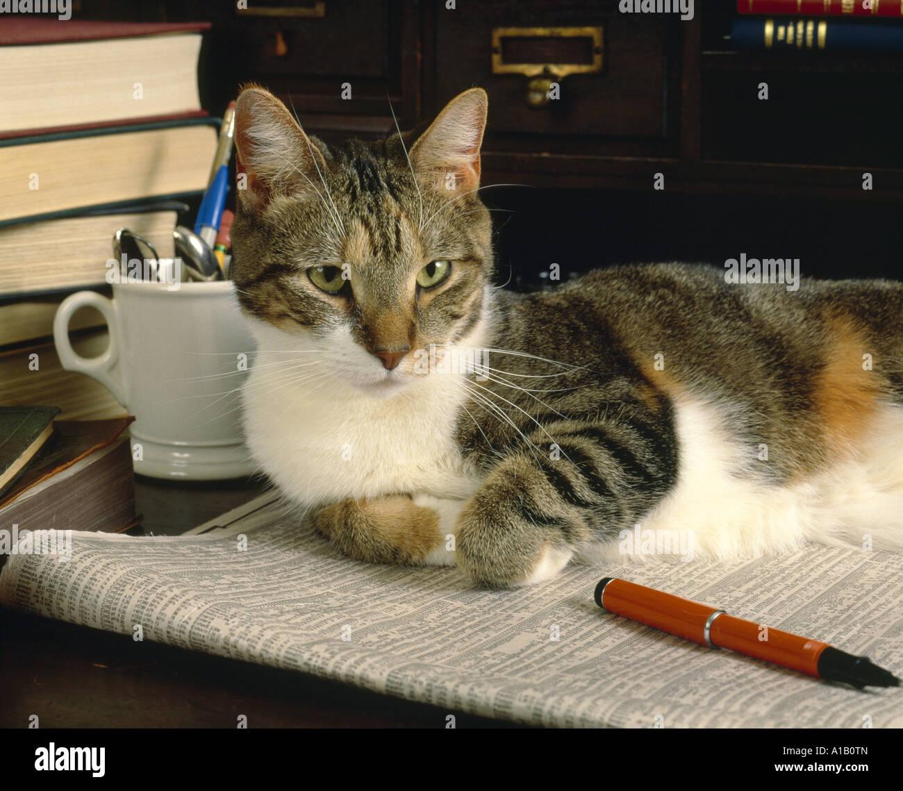 Cat With Book Stockfotos & Cat With Book Bilder - Alamy