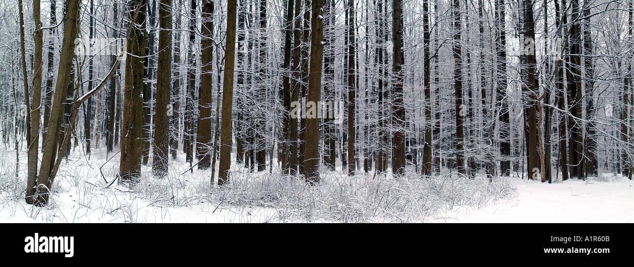 Winterlandschaft in Jocky hohlen NHP, Morristown, NJ Stockbild