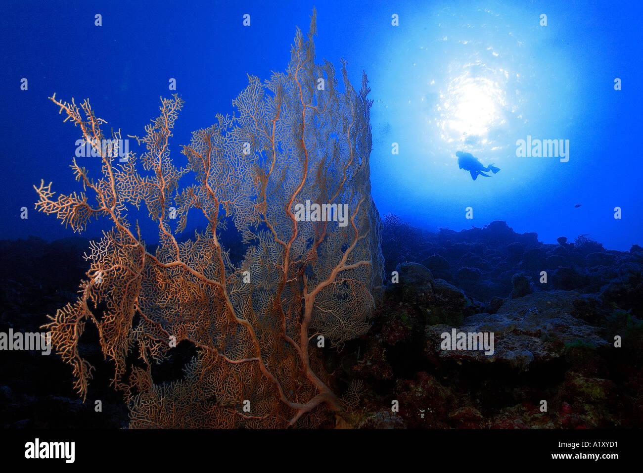 Scuba Diver Sunburst Silhouette Stockfotos & Scuba Diver Sunburst ...