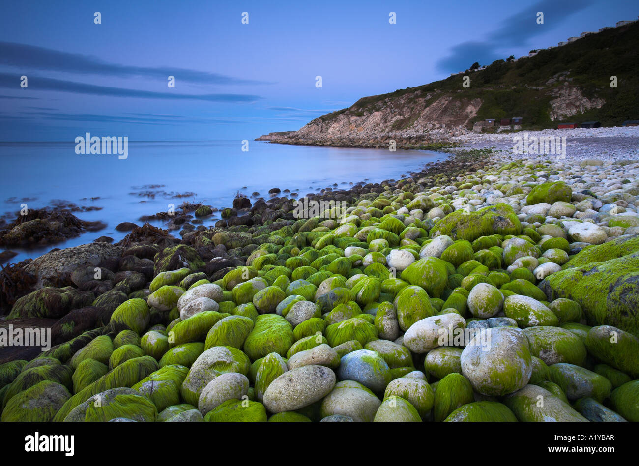 Beach algae stockfotos beach algae bilder alamy for Grune algen