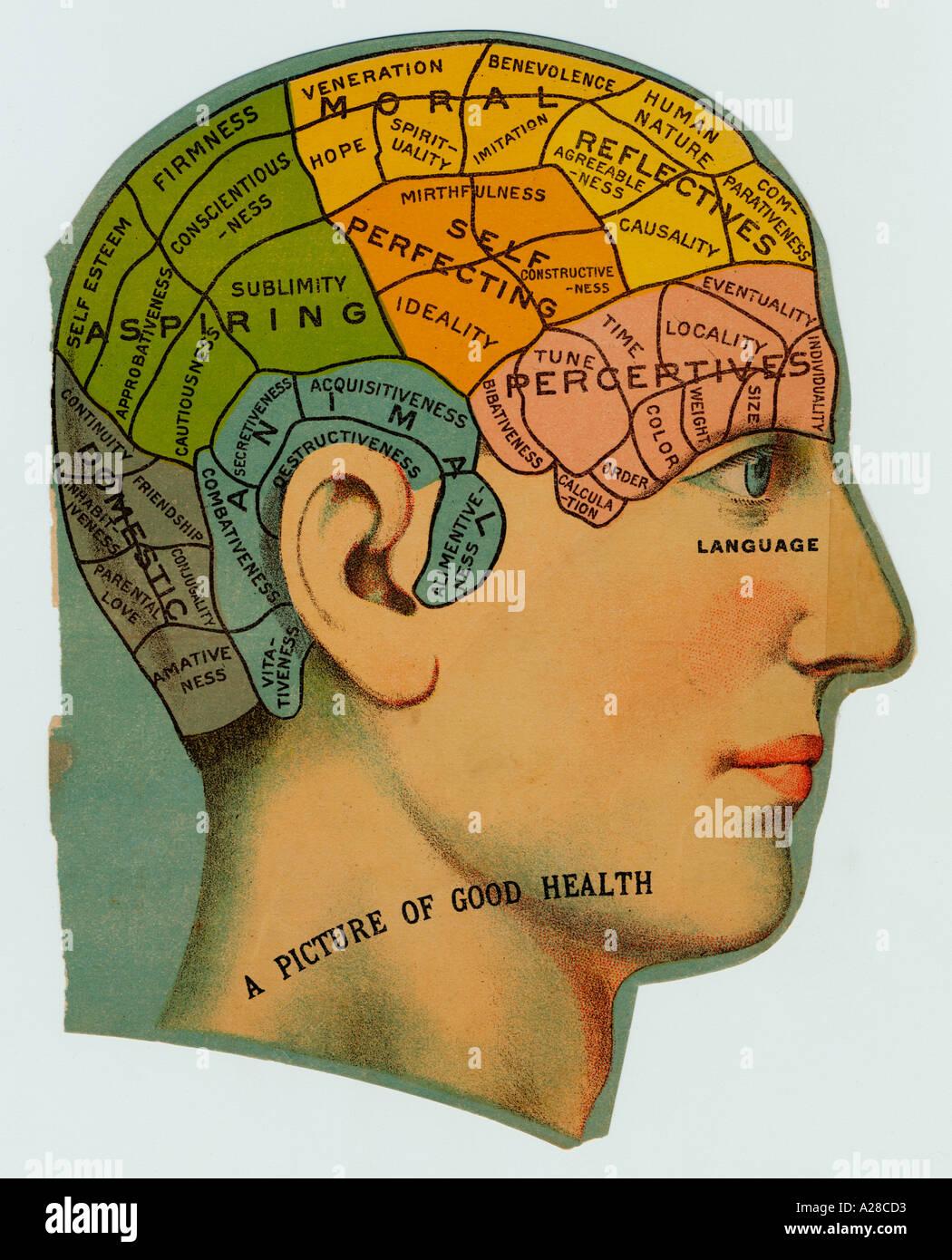 Phrenologische Kopf Schrott Stockbild
