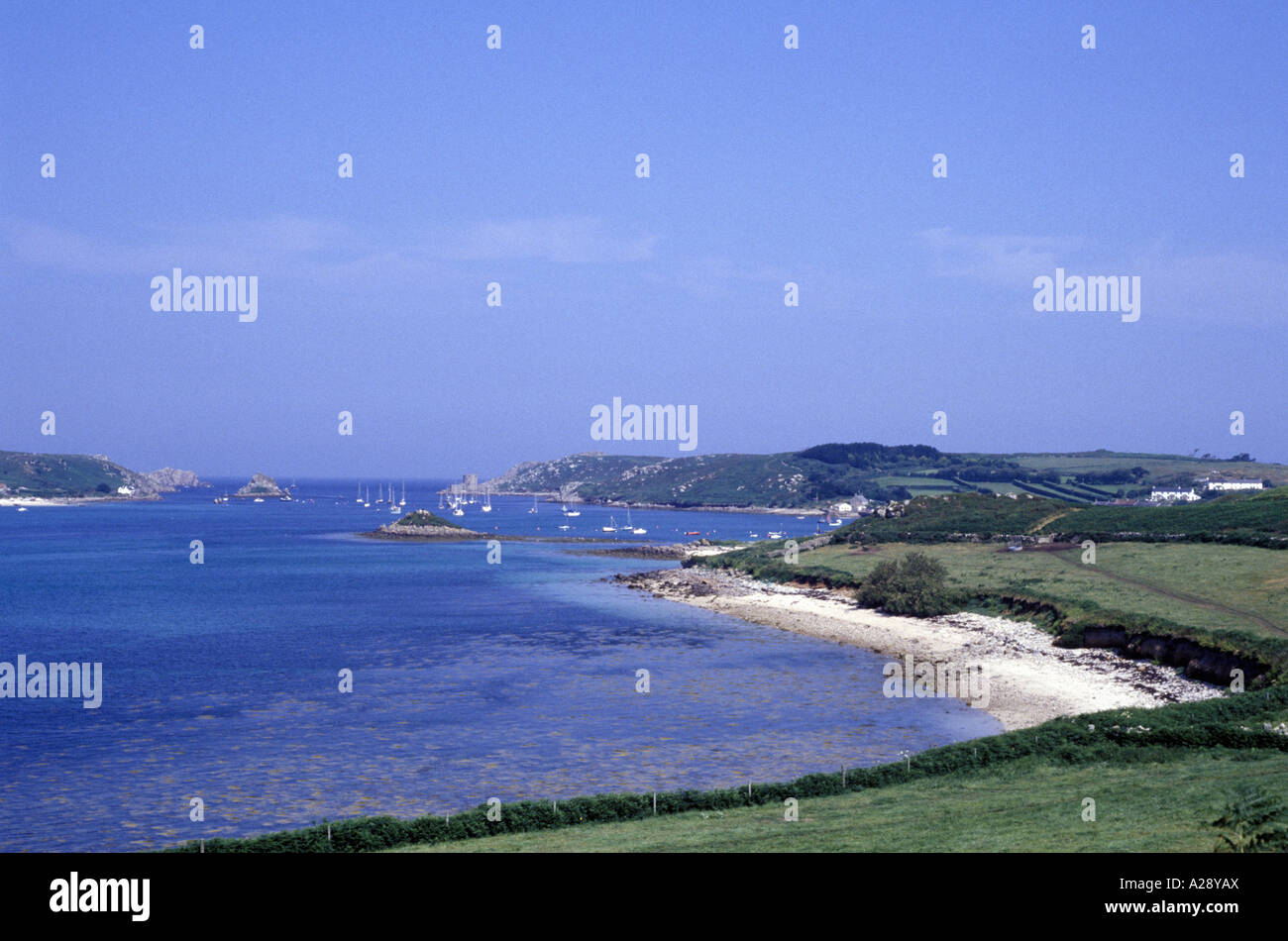 Tree Blue Sky Cornwall Uk Stockfotos & Tree Blue Sky Cornwall Uk ...