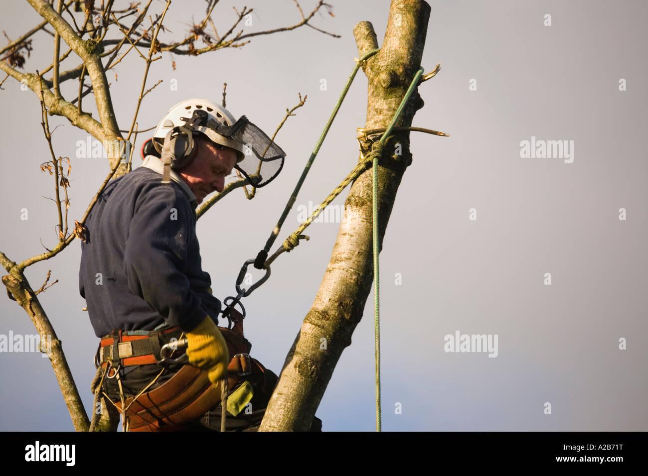 Klettergurt Seil Befestigen : Baumpfleger in aktion helm ohr protektoren gurt für die sicherheit