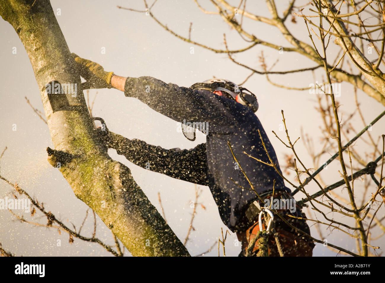 Klettergurt Baum : Baumpfleger in aktion tragen helm visier ohr protektoren