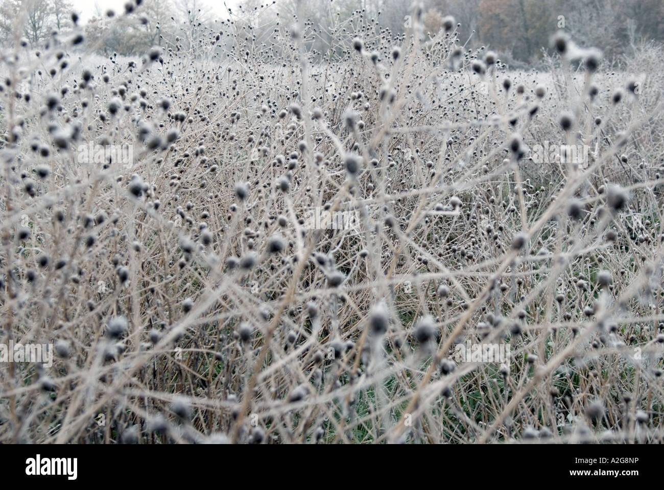 auf der Suche einem Feld mit Zweigen und Gestrüpp bedeckt mit Frost Eiszapfen Stockbild