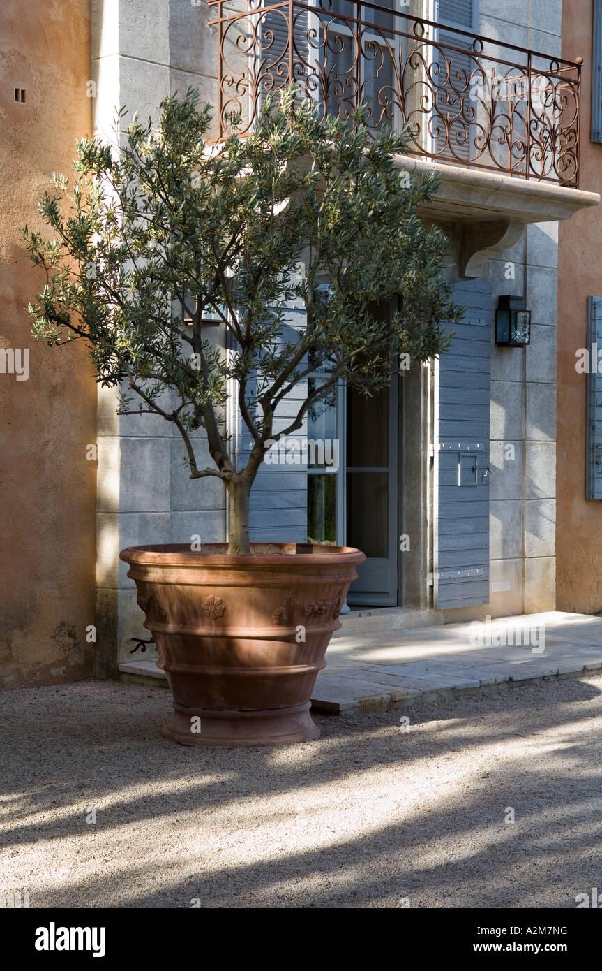 gro e terrakotta vase mit olivenbaum vor einem provenzalischen haus stockfoto bild 10552107. Black Bedroom Furniture Sets. Home Design Ideas