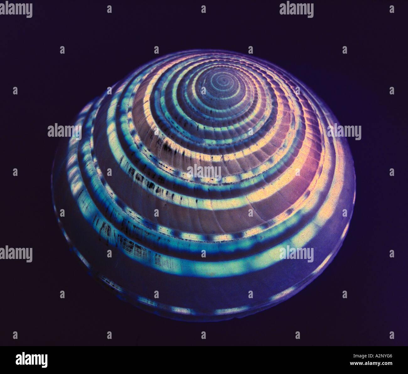 Clear Sonnenuhr Muschel Stockbild
