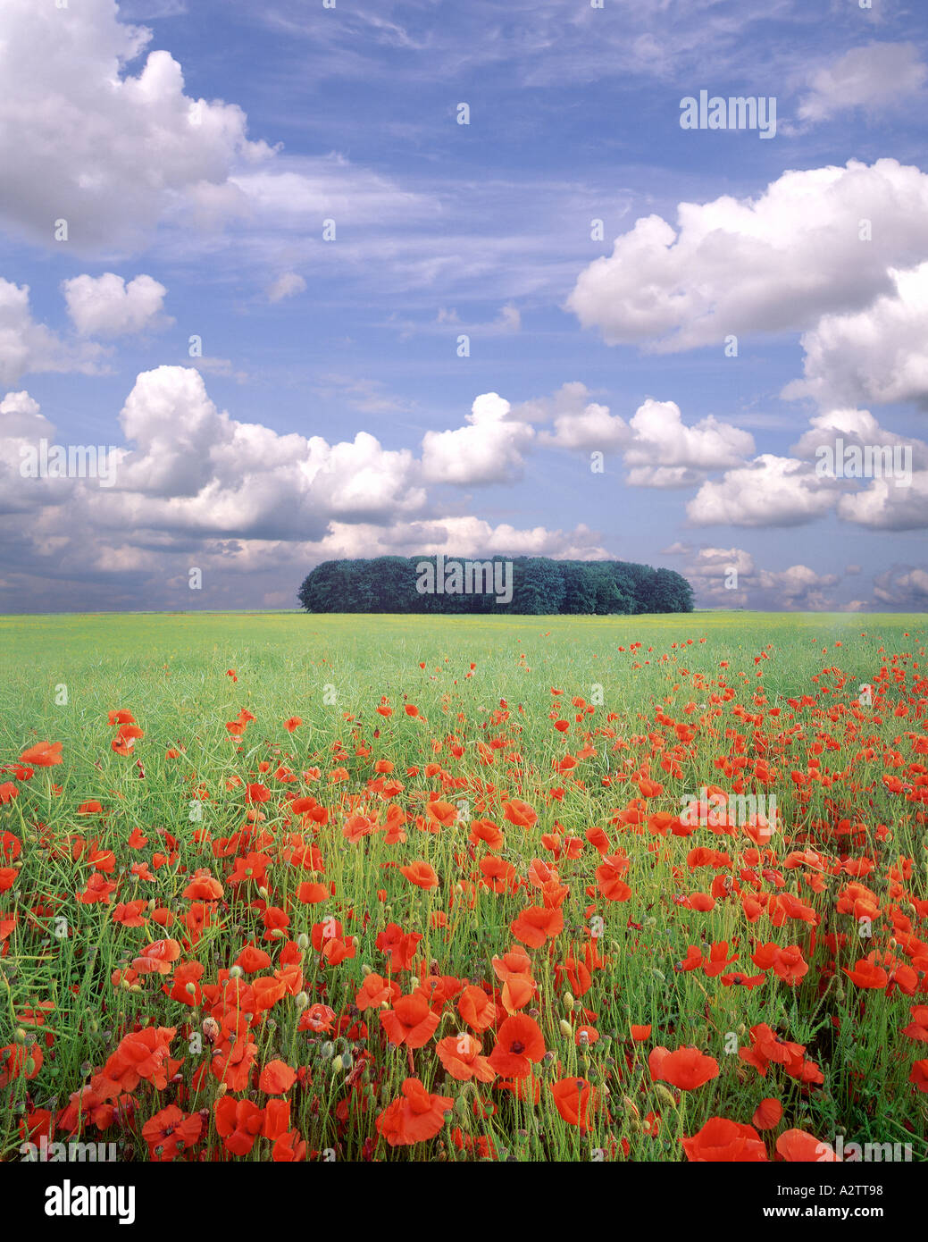 GB - GLOUCESTERSHIRE: Poppyfield in den Cotswolds Stockbild
