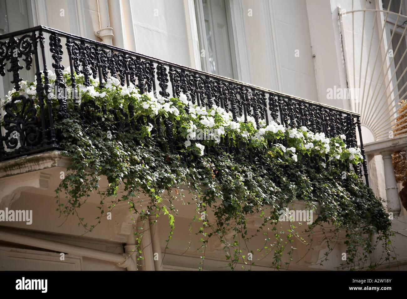 Hangenden Weissen Blumen Auf Dem Balkon Von Wilton Crescent In