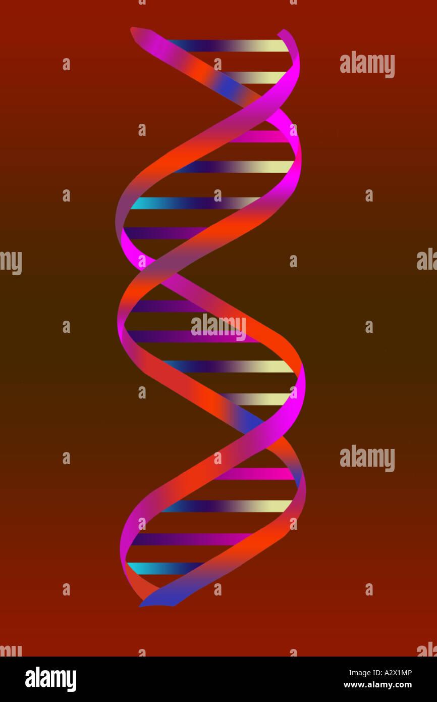 Doppelhelix der Desoxyribonukleinsäure (DNA).   Wissenschaftliche Illustration. Stockbild