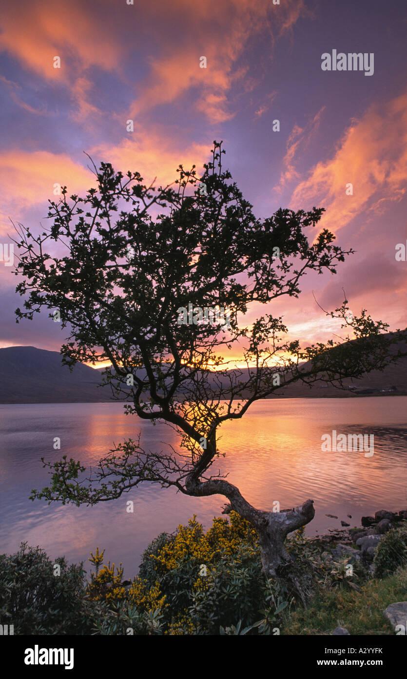 Wind-Bent Weißdorn und Lough Feeagh bei Sonnenuntergang, Nephin Beg Berge, Co. Mayo, Irland. Stockbild