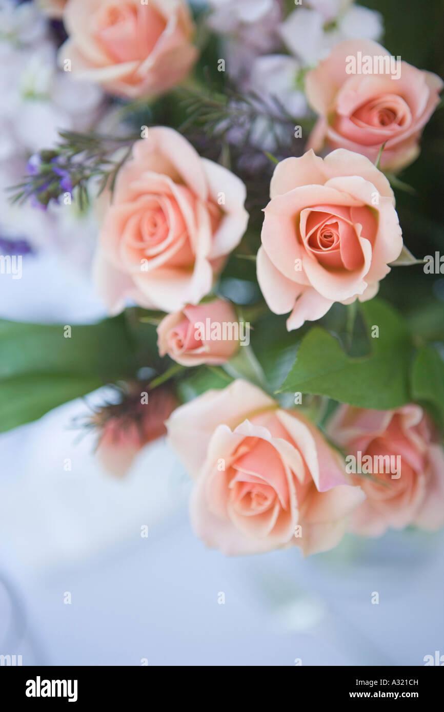 Bouquet von prink Rosen Stockfoto