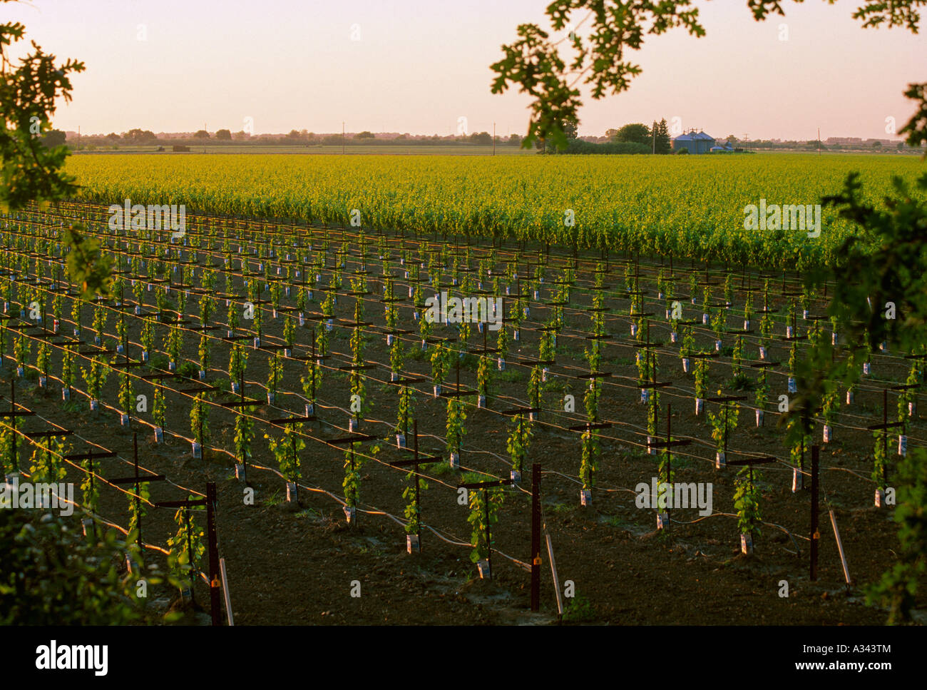 Vines In The Sun Stockfotos & Vines In The Sun Bilder - Seite 2 - Alamy