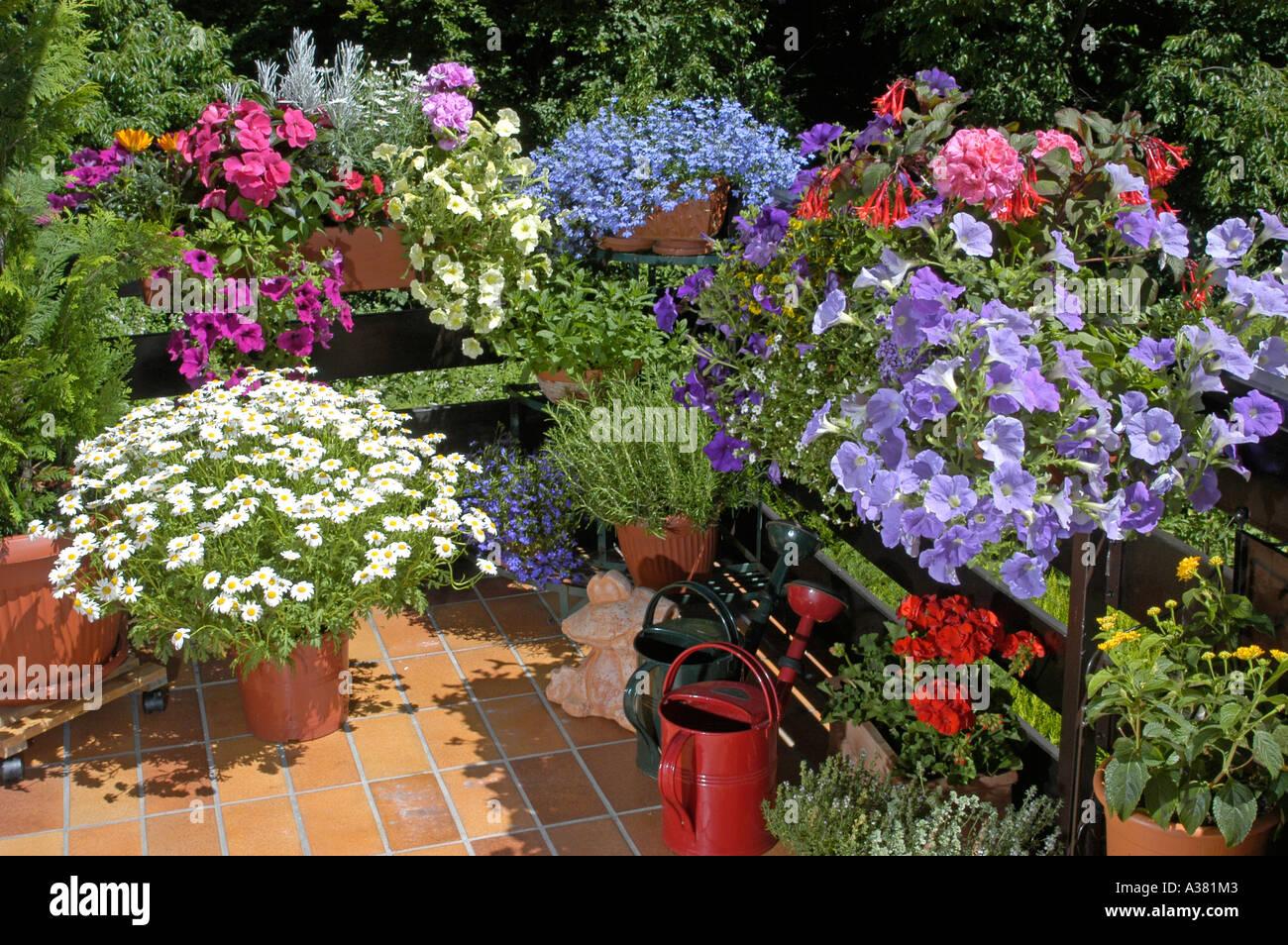 balkon balkonbepflanzung blumenkaesten blumen sommerblumen blueten balkonblumen terrasse. Black Bedroom Furniture Sets. Home Design Ideas